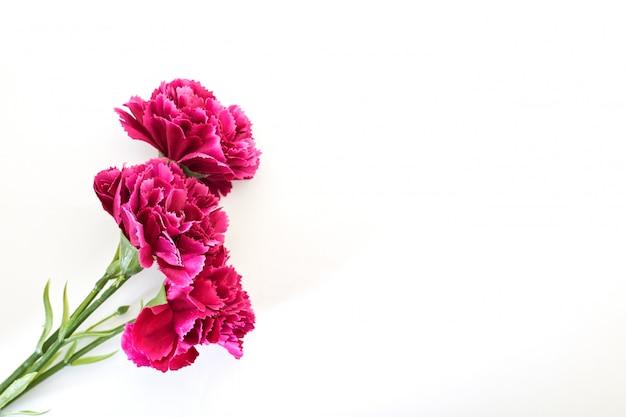 8 de marzo día de la mujer clavel