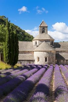 Abadía de senanque y campo de lavanda. francia.
