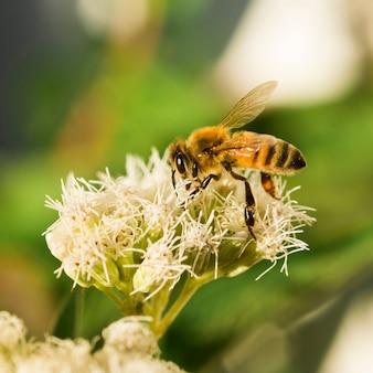 Abeja buscando polen