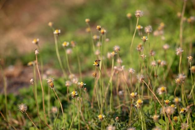 Abeja en flor y hierba para el fondo