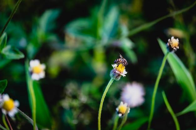 Una abeja en la flor de la hierba.