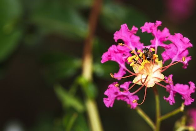 Abeja negra recolectando polen en flor