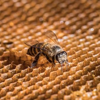 La abeja está en el panal.