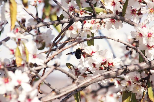 Abeja de primavera