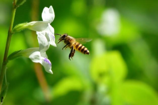 Una abeja volando hacia la bella flor