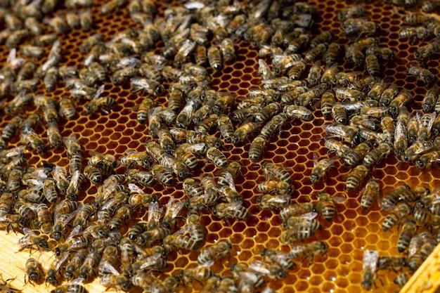 Las abejas se arrastran en un primer del marco de madera. abejas en un marco con fondo de miel.