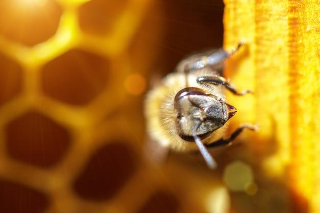 Abejas hermosas en panales con primer plano de miel