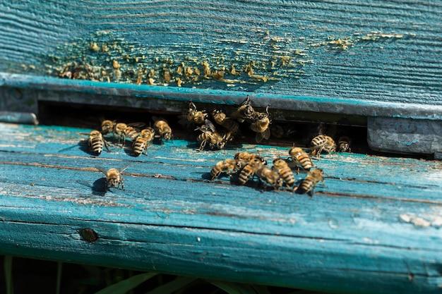 Las abejas saliendo de la colmena en la granja