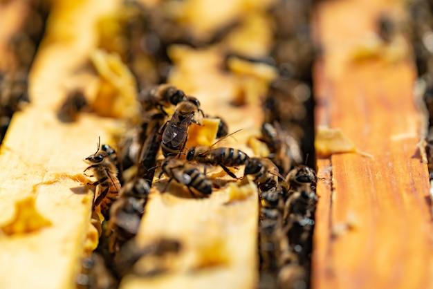 Las abejas traen miel a sus colmenas en clima cálido todo el día