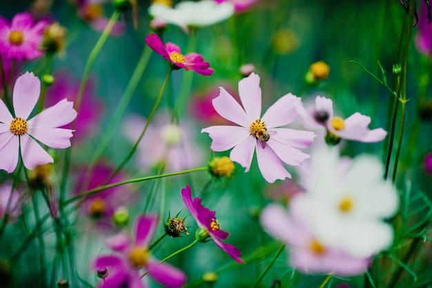 Abejorro en flor recogiendo néctar y polinizando