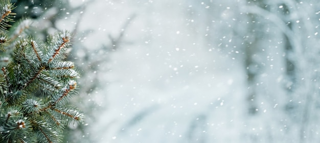 Abeto cubierto de nieve en el bosque de invierno durante una nevada