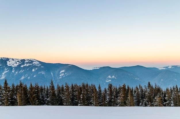Abetos, cielo azul con luz solar y altas montañas de los cárpatos en el fondo