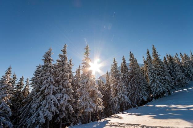 Abetos cubiertos de nieve y escarcha en la ladera de la montaña