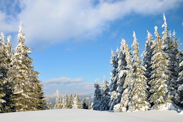 Abetos cubiertos de nieve, fondo de paisaje de invierno