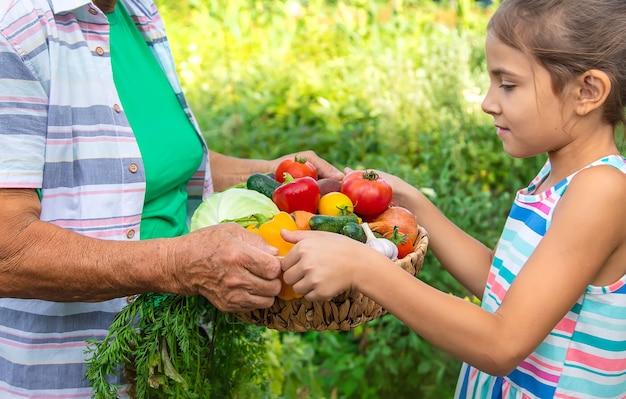 Abuela en el jardín con un niño y una cosecha de verduras. enfoque selectivo. comida.