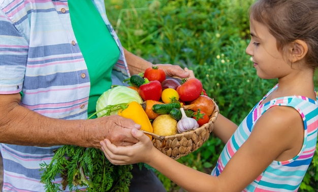 Abuela en el jardín con un niño y una cosecha de verduras. enfoque selectivo.