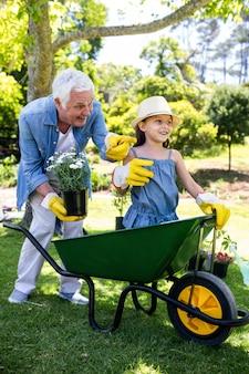 Abuelo llevando a su nieta en una carretilla de mano