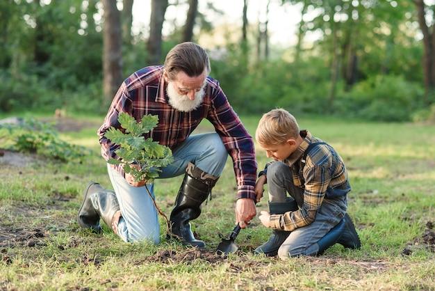 Abuelo mayor barbudo atractivo con su nieto encantador en césped verde plantar plántulas de roble y verter con agua.