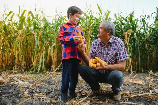 Abuelo y nieto con mazorcas de maíz maduras tomando selfie cerca de plantas secas mientras trabajan juntos en el campo agrícola