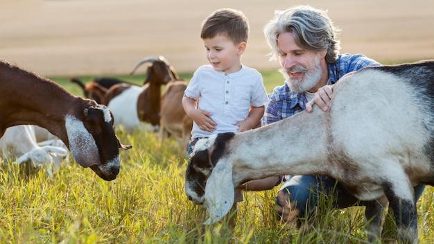 Abuelo y niño con cabras en el campo