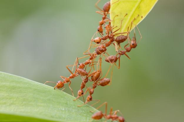 Acción de hormigas de pie. equipo de la unidad de puente ant.