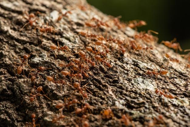 Acción de hormigas de pie equipo de unidad de puente de hormigas, equipo de concepto trabajar juntos