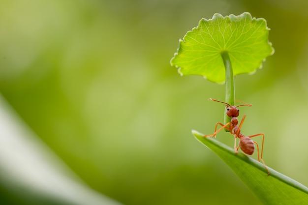 Acción de hormigas de pie. no llevar paraguas para protección.