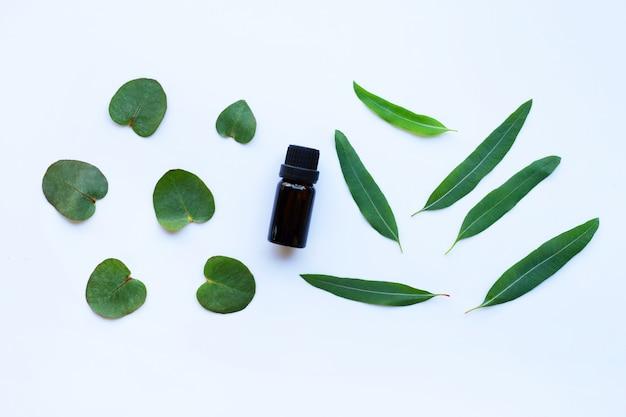 Aceite esencial de eucalipto con hojas verdes sobre blanco