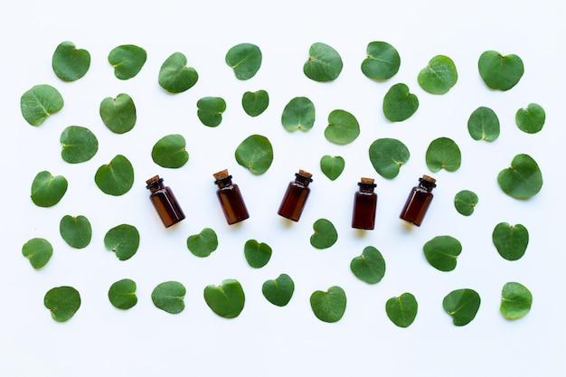 Aceite esencial de eucalipto con licencia en blanco.
