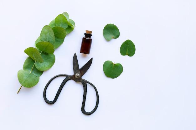 Aceite esencial de eucalipto con rama, hojas de eucalipto y tijeras vintage.