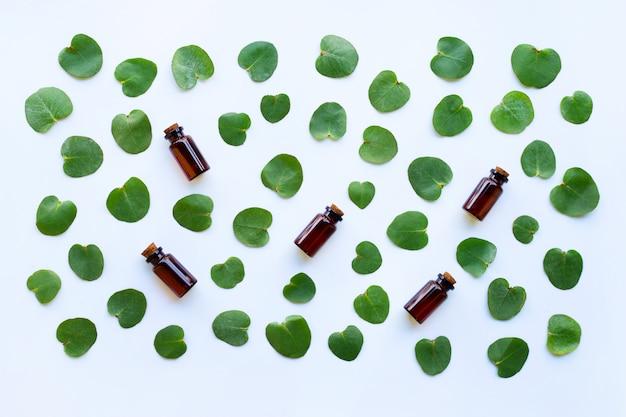Aceites esenciales de eucalipto con hojas en blanco.