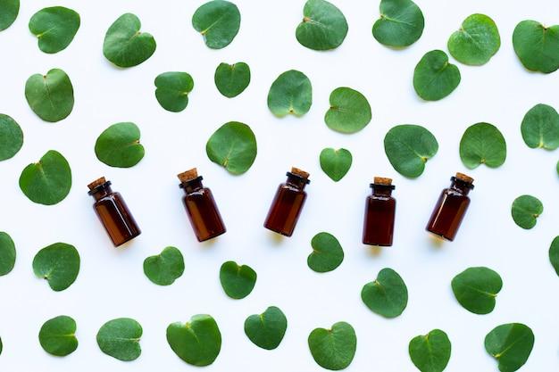 Aceites esenciales de eucalipto con hojas.