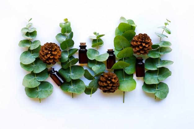 Aceites esenciales de eucalipto con ramas de eucalipto y piñas.