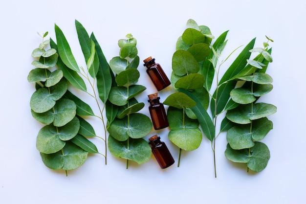 Aceites esenciales de eucalipto con ramas de eucalipto.