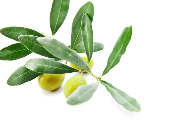 Aceitunas con hojas en rama aislado sobre blanco