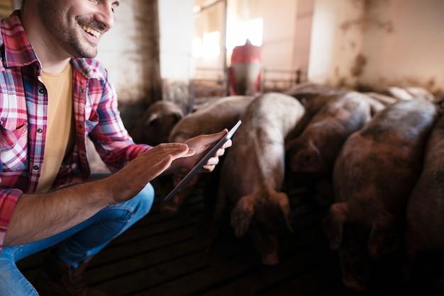 Acercamiento del agricultor tocando la tableta en la granja de cerdos mientras los cerdos animales domésticos comen en segundo plano.