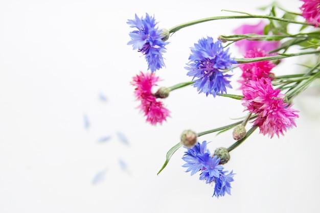 Acianos rosas y azules sobre un fondo claro