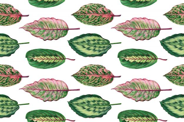 Acuarela de colores tropicales hojas de fondo transparente.