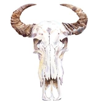 Acuarela de cráneo animal. cráneo de búfalo.