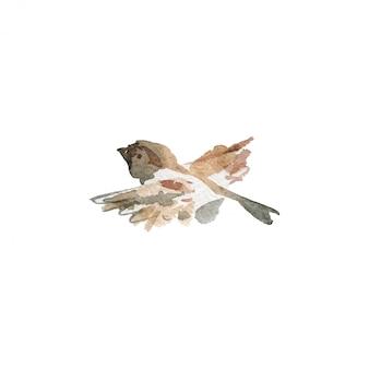 Acuarela gorrión volador. pájaro dibujado a mano en blanco