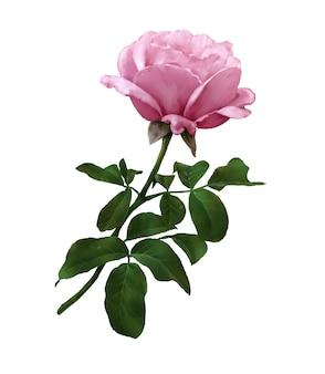 Acuarela de hojas y flor rosa sobre blanco