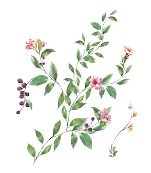 Acuarela de hojas y flores, sobre fondo blanco.