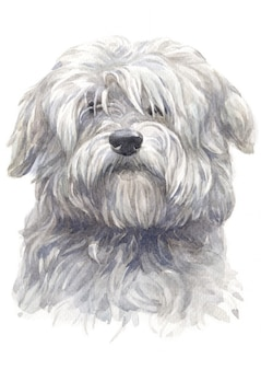 Acuarela del perro blanco coton du tulear.