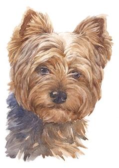 Acuarela de perros pequeños, plumas marrones, yorkshire terrier.