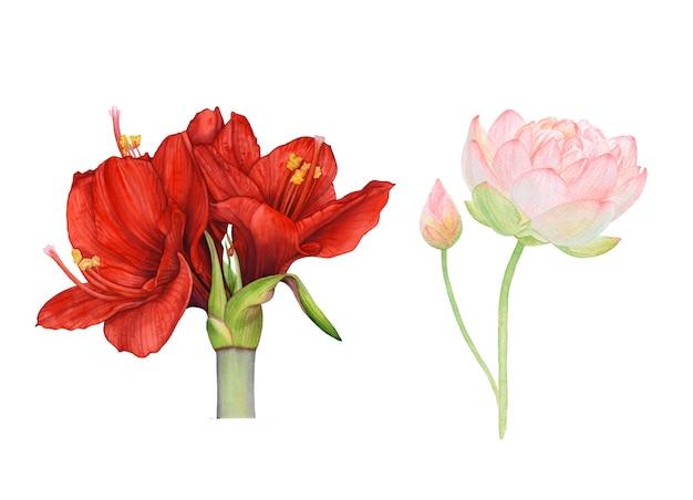 Acuarela roja, flores rosadas sobre fondo blanco.