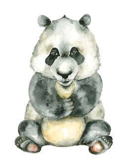 Acuarela sentado panda
