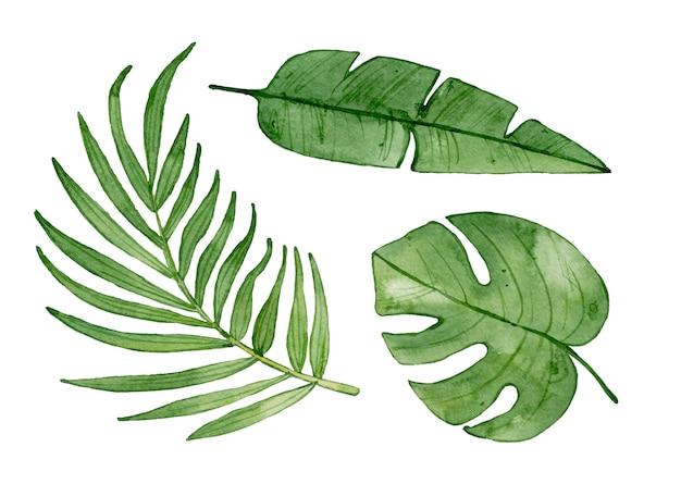 Acuarelas hojas tropicales aisladas.