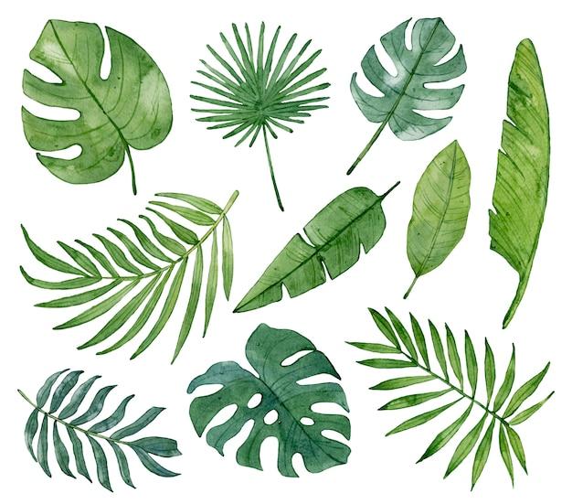 Acuarelas hojas verdes tropicales aisladas.