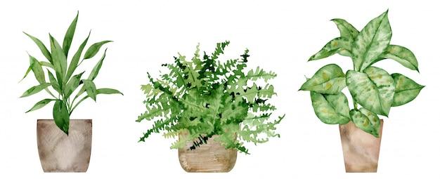 Acuarelas plantas en macetas caseras