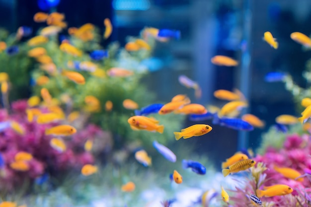 Acuario con peces naranjas y azules